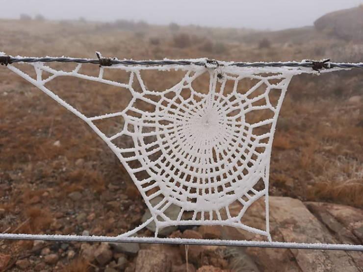 Замёрзшая паутина, которая выглядит так, словно она вязаная
