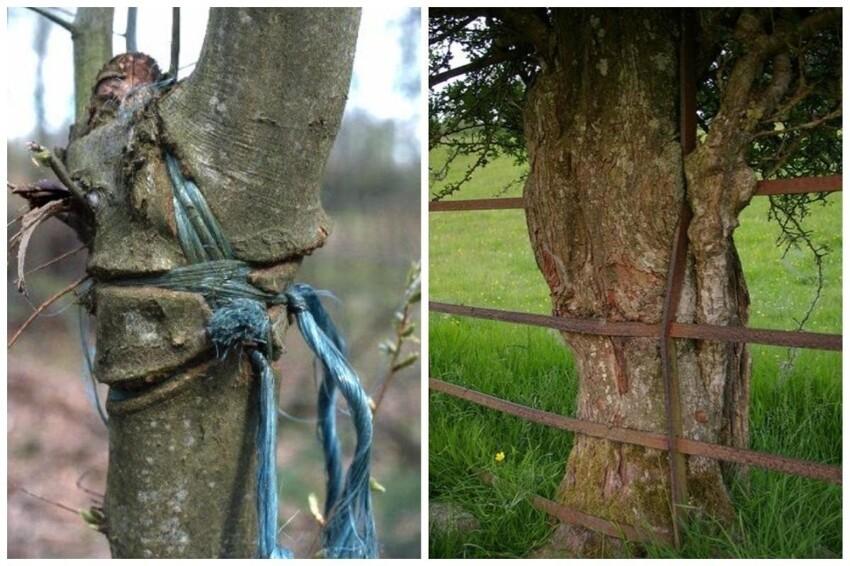 25 примеров того, как  деревья, осваивают предметы техносферы