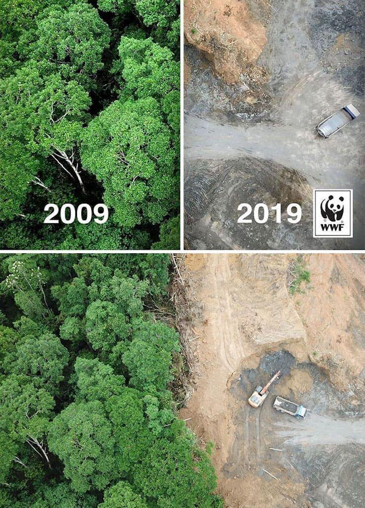 Фото в рубке До и после 10 лет оказалось одним целым снимком. Хотя вырубка лесов на лицо