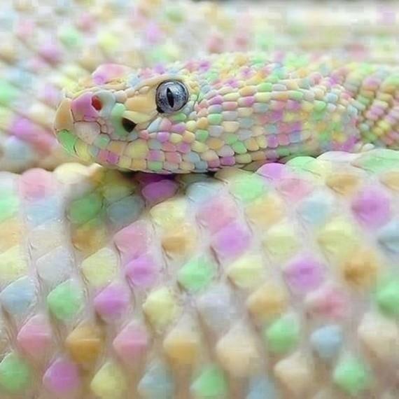 Типа радужная змея - таких в природе нет. Это фотошоп