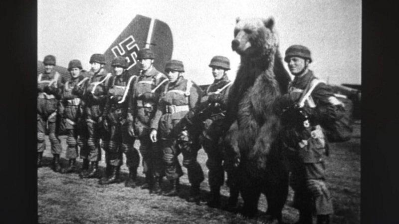 Медведь на службе в Вермахте