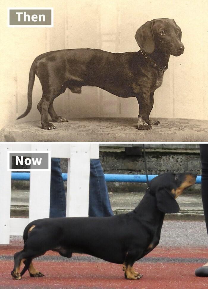 Такса - тогда и сейчас