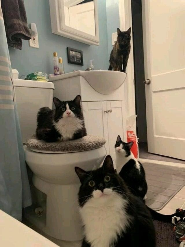 Я стараюсь не ходить в туалет у своей знакомой