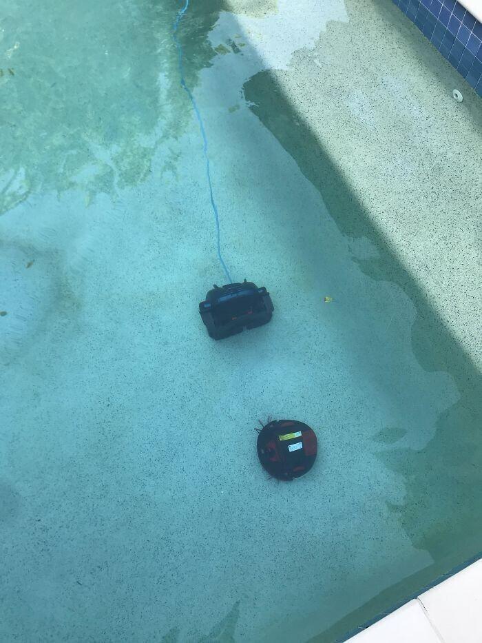"""""""Вот что происходит, когда ваша жена оставляет дверь в бассейн открытой. Дорогой робот-пылесос решил, что ему срочно нужно познакомиться с пылесосом для чистки бассейна... Черт подери!"""""""
