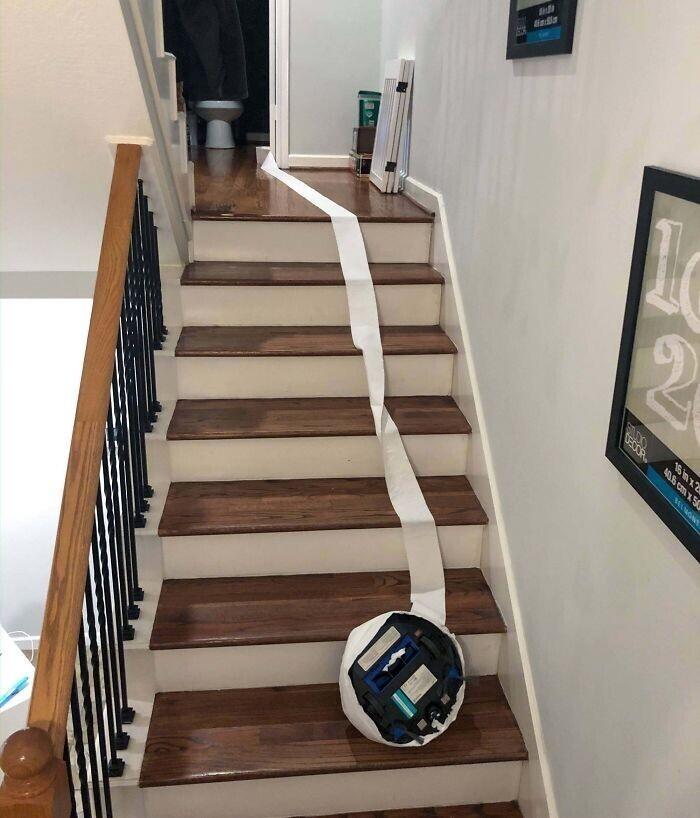 """""""Самоубийство Roomba. Он как-то умудрился замотаться в туалетную бумагу, перекрыв свои датчики, и храбро бросился вниз"""""""