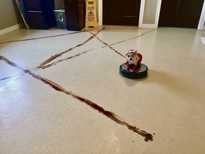 """""""Этот детский сад для собак получил ценный урок: не оставлять робот-пылесос в приемной"""""""