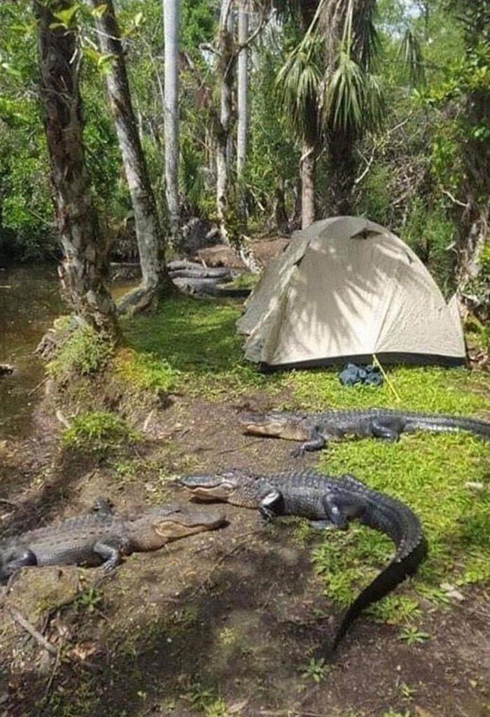 Кемпинг во Флориде выглядит весело