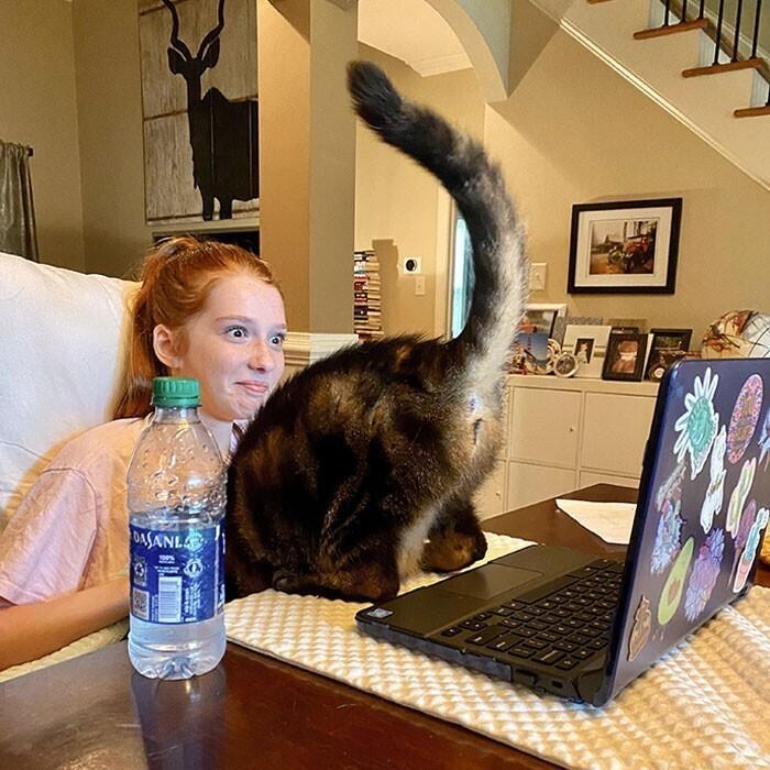 """""""Наша кошка любит участвовать в онлайн-занятиях моей дочери"""""""