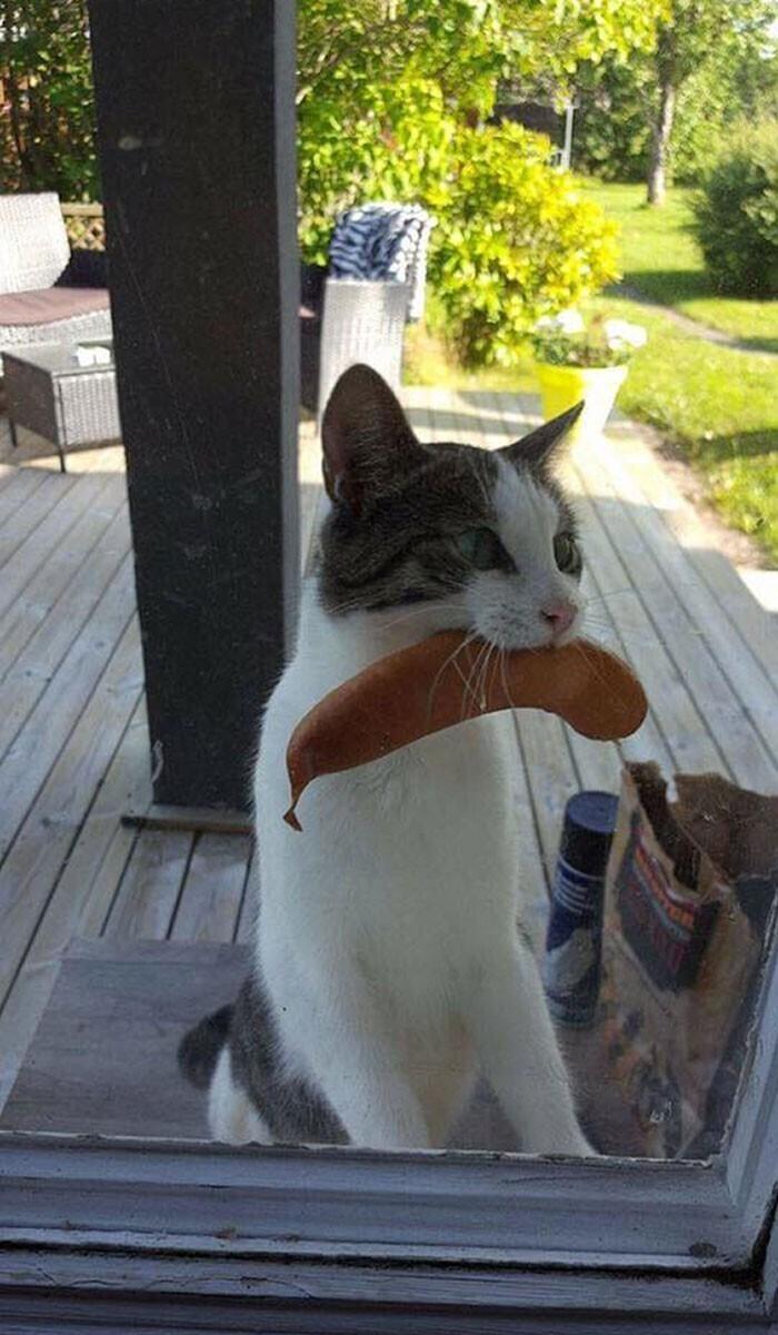 """""""А наш кот вернулся домой с сосиской, украденной у соседей"""""""
