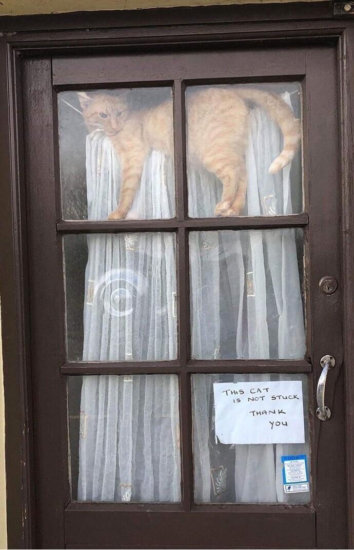 """""""Эта кошка не застряла, спасибо"""" - интересно, что у них там происходит?"""