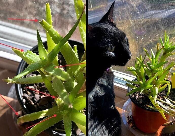 """""""Задалась вопросом, что за существа поедают мое растение.. А потом застала этого преступника"""""""