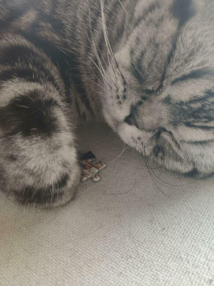 """""""Мой кот спит с последним кусочком пазла, который я искала минут 10"""""""