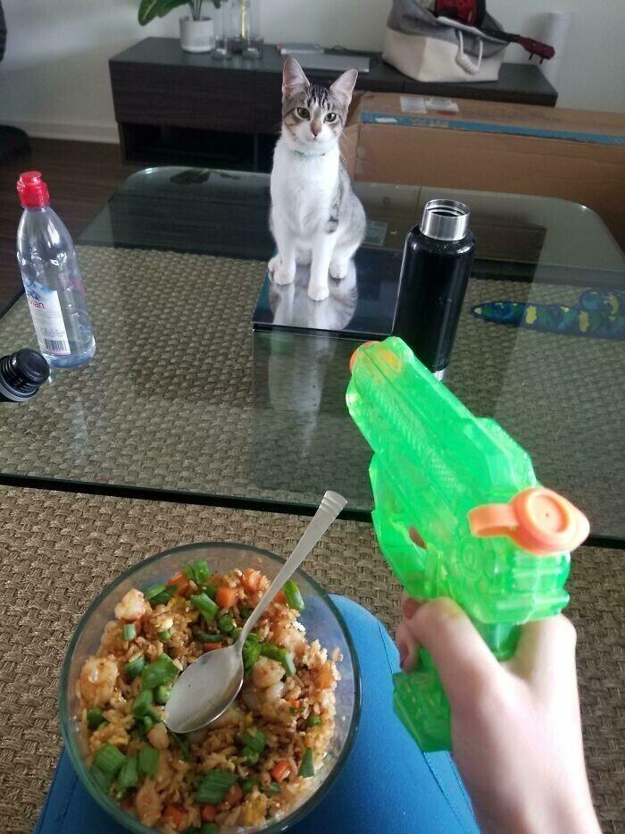 """""""Приходится есть с водным пистолетом, потому что эта дурашка сворует всё!"""""""