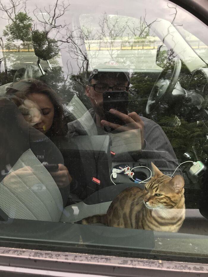 """""""Мы с женой менялись местами во время поездки, и только мы вышли из машины, наш кот нажал на кнопку блокировки. Теперь не можем зайти"""""""