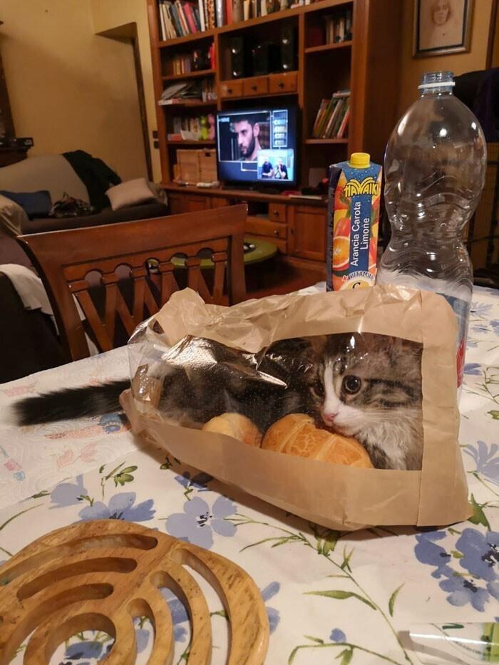 """""""Я - кот, мне так удобно"""""""