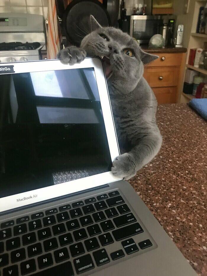 """""""Удаленка - то еще испытание, когда у тебя кот.."""""""