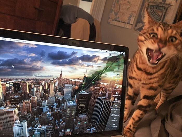 """""""Эта нечисть только что покусала мой ноутбук, и теперь там трещина"""""""