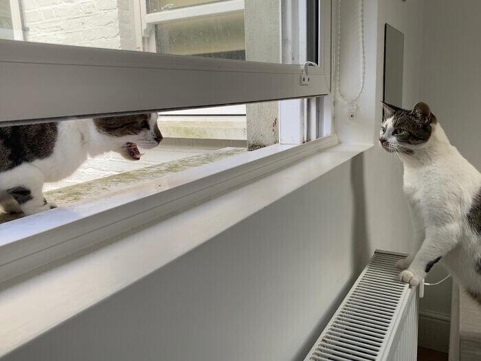 """""""Соседский кот периодически приходит к нам, чтобы протиснуть голову через щель в окне и просто покричать на моего кота"""""""