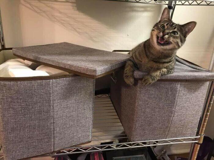 """""""Моя кошка обожает таскать и рвать туалетную бумагу. Сегодня она нашла всю мою заначку, и вот ее злобное выражение морды"""""""