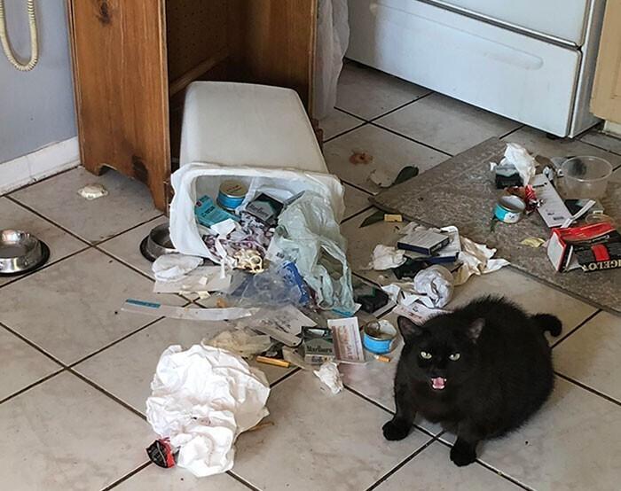 """""""Мой кот на диете. Кажется, решил психануть"""""""