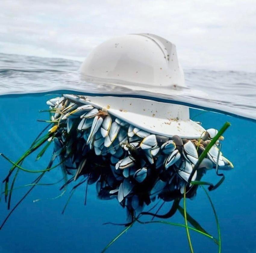 Потерянную каску захватили морские уточки