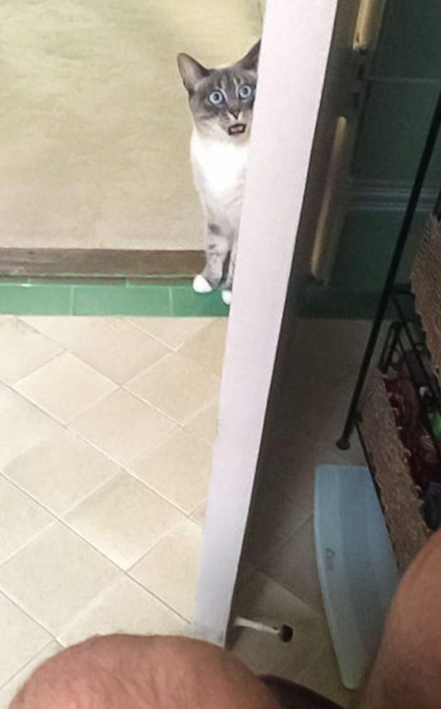 Кот всегда очень удивляется, когда видит меня на унитазе