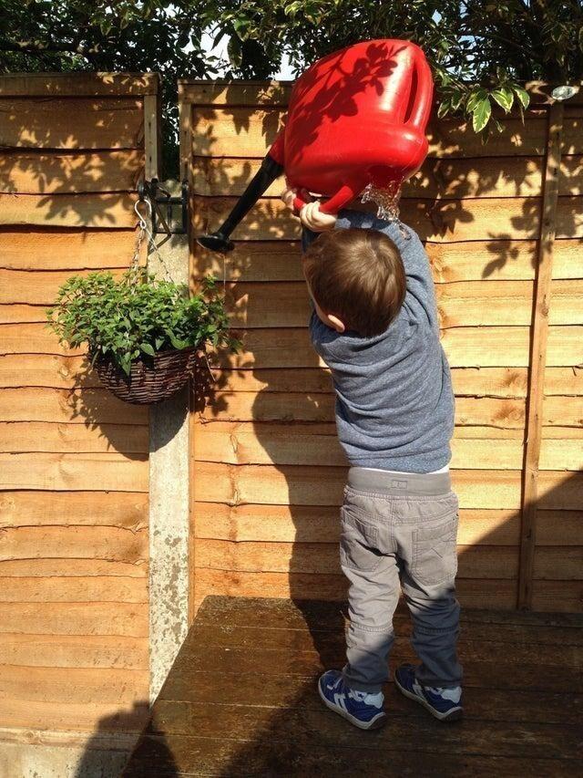 Юного садовника ждёт головомойка