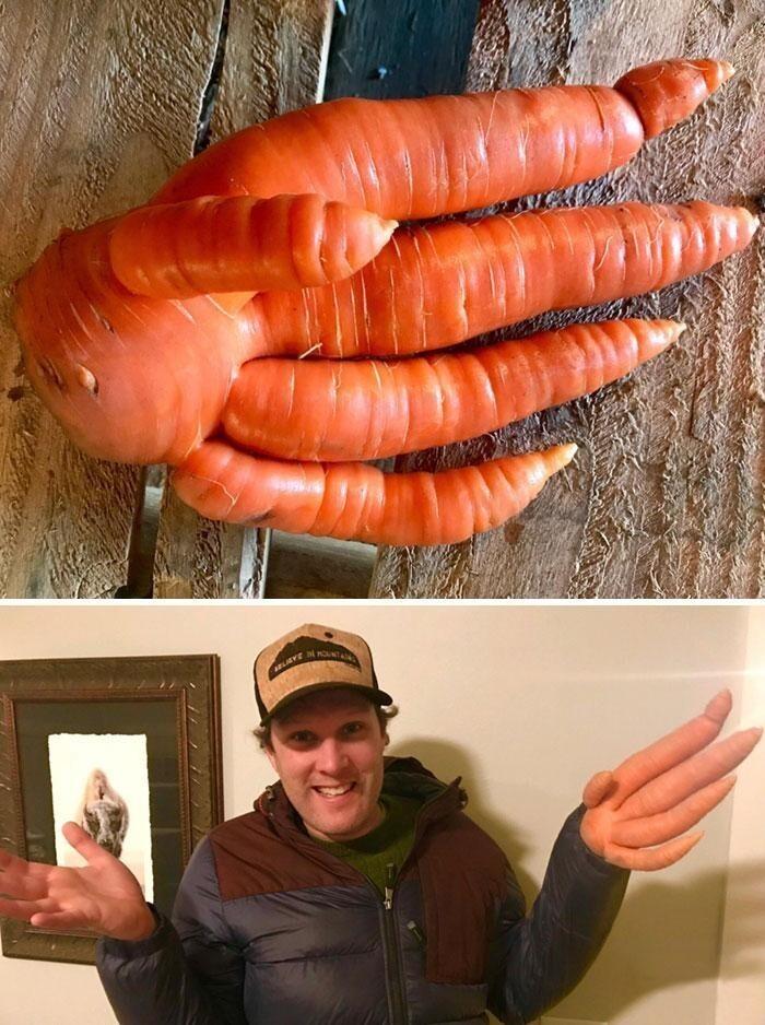 """""""Копали морковь на ферме и нашли эту удивительную руку-морковь"""""""