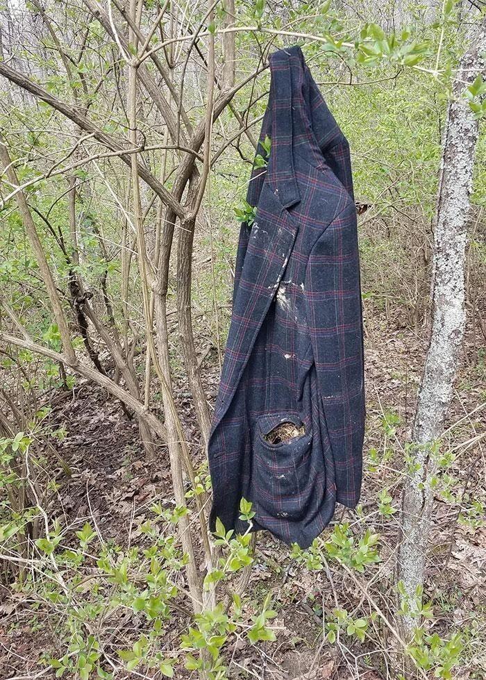 Птицы свили гнездо в кармане старого пиджака в лесу