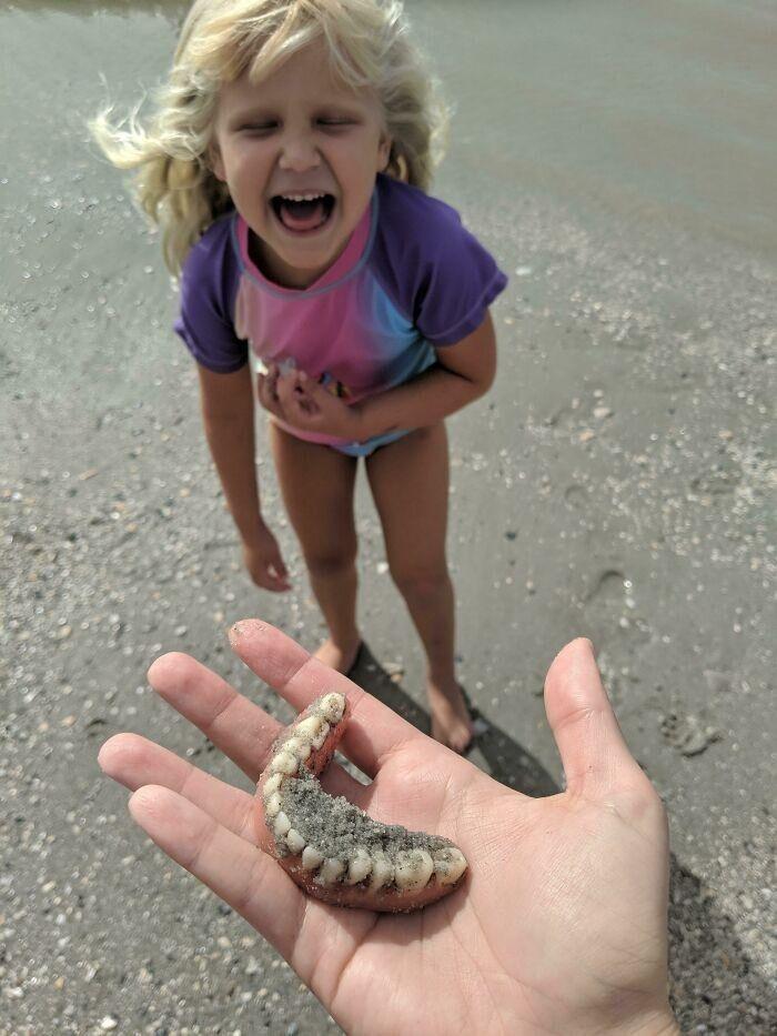 """""""Пошли на пляж, чтобы найти зубы акулы, и это совсем не то, чего я ожидал, когда дочь крикнула «Я нашла зубы!»"""""""