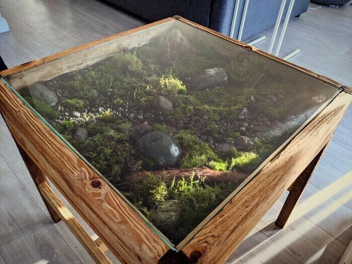 Кофейный столик + домашний моховый сад