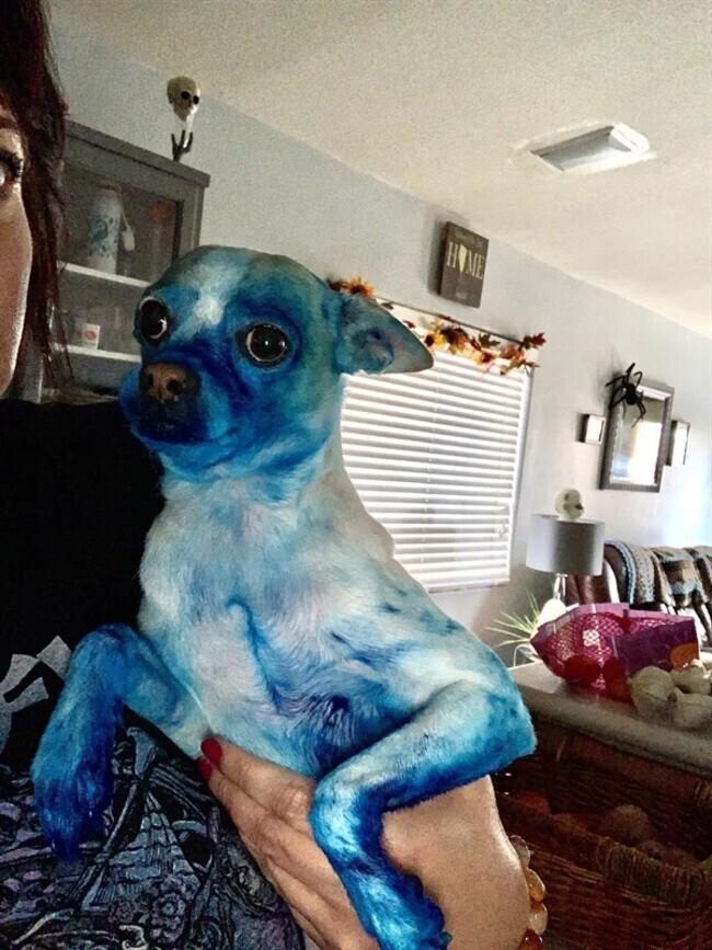 Когда забываешь убрать краски, и вместо собаки получаешь русалочку