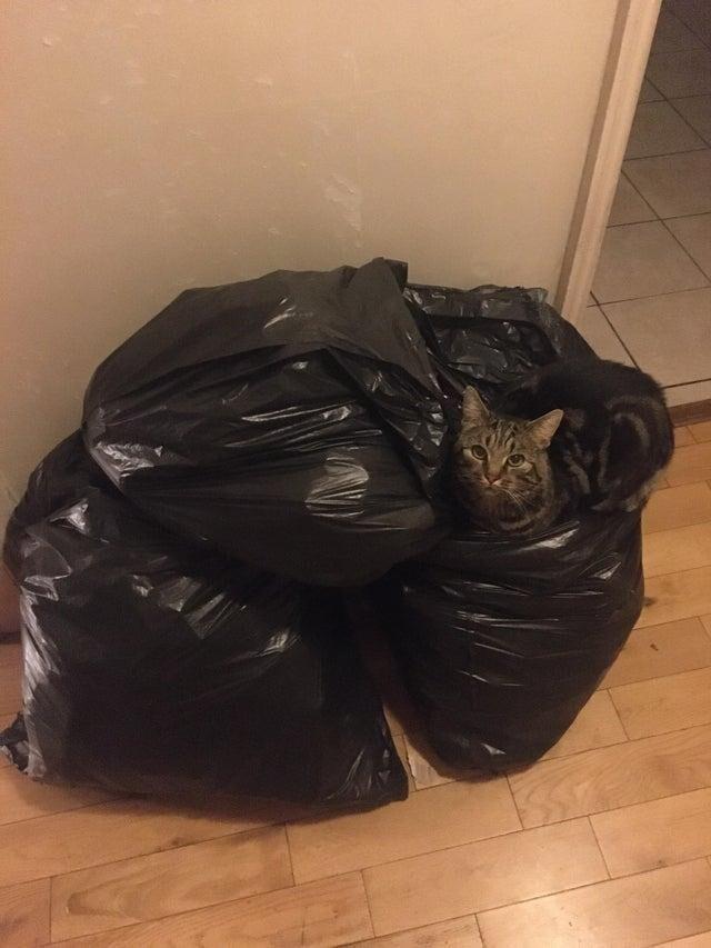 У него есть мягкая лежанка, но он любит спать на пакетах
