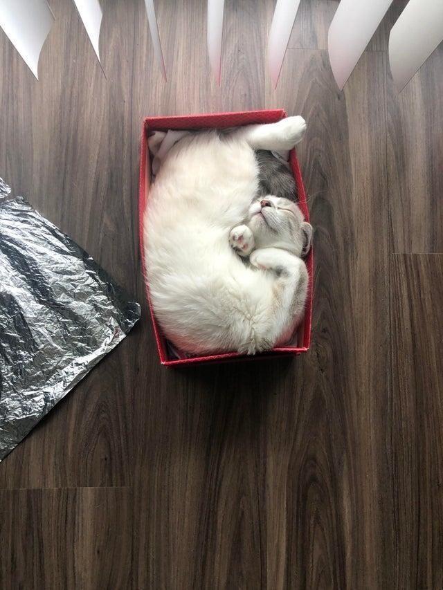 Любимая коробка