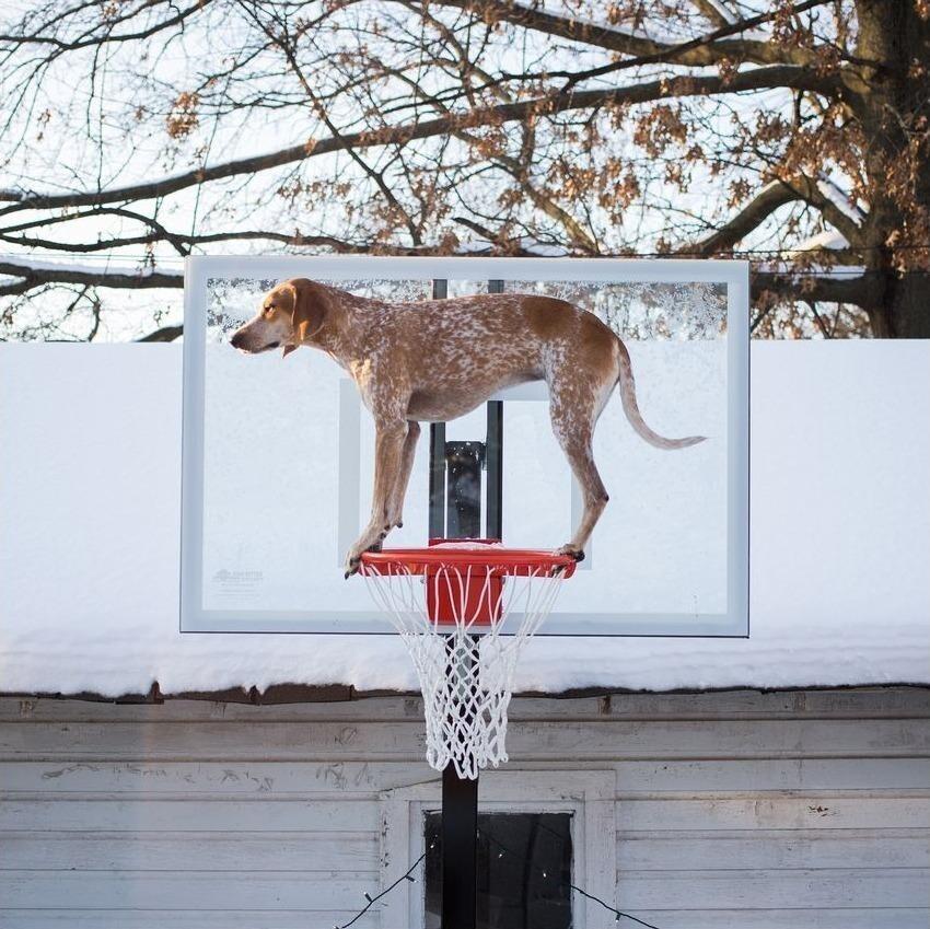 Странная собака