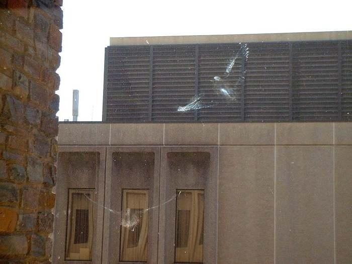 Следы птиц на окне
