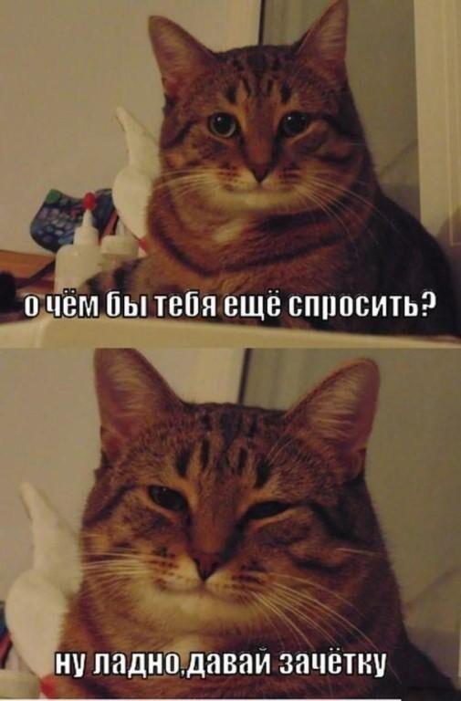 Милый понимающий кот - мудрый кот, который тебя понимает, всегда поддержит и знает чего ты хочешь