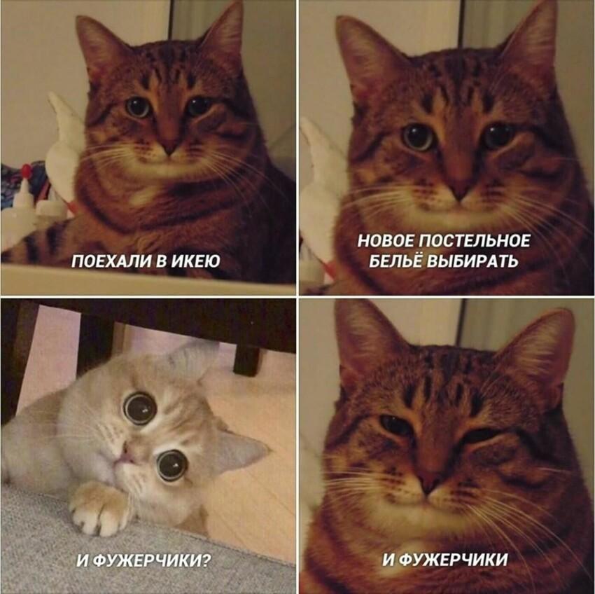 Часто этот кот появляется в компании с разными кошечками и, по мнению пользователей, мем создает уют и милоту