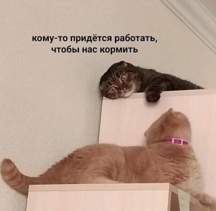 Коты наконец-то смогут от нас отдохнуть