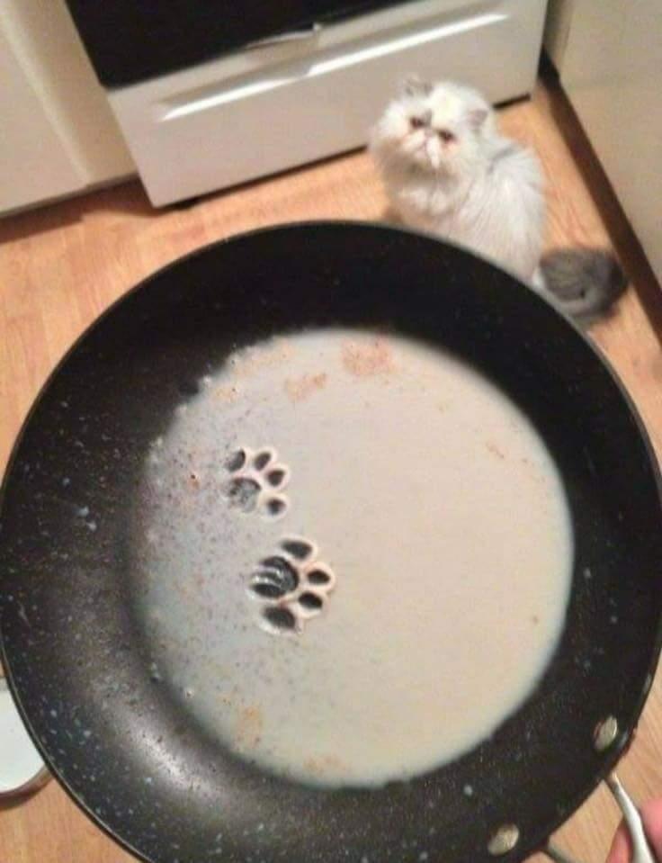 Коты вольноходящие и следы от их похождений