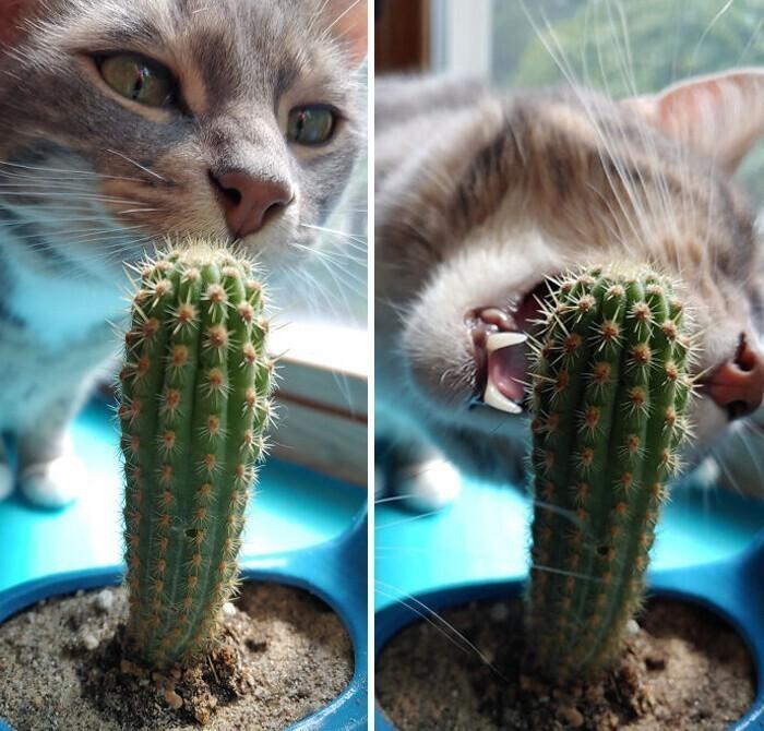 """""""А я думал, что мой кот более-менее адекватный"""""""