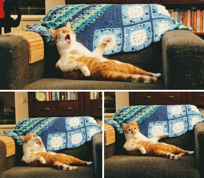"""Наш кот - идиот. Драматичный идиот"""
