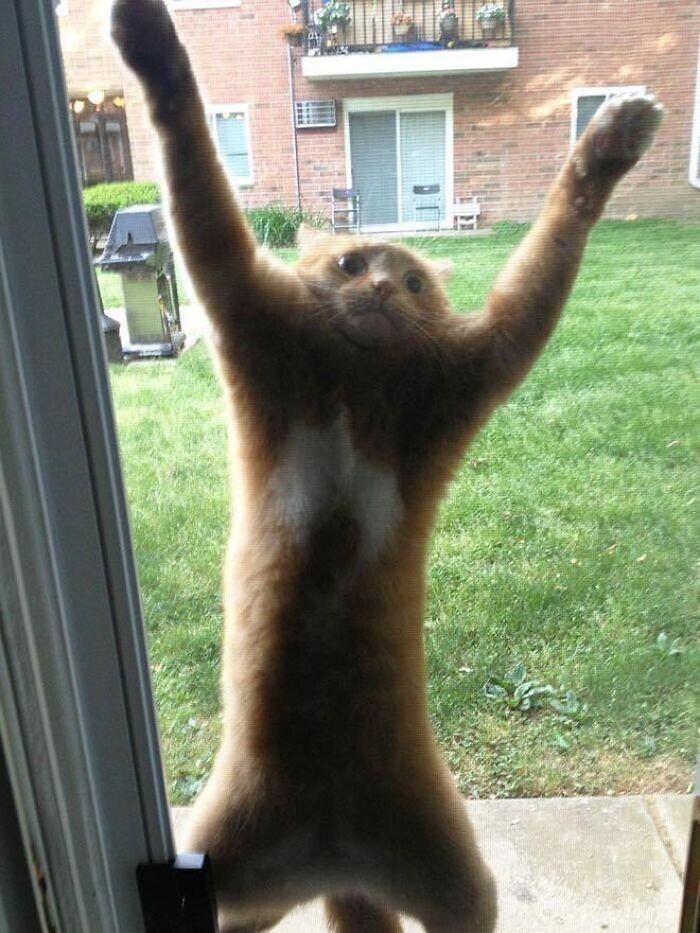 """""""Мне кажется, он хочет зайти внутрь. А вы как думаете?"""""""