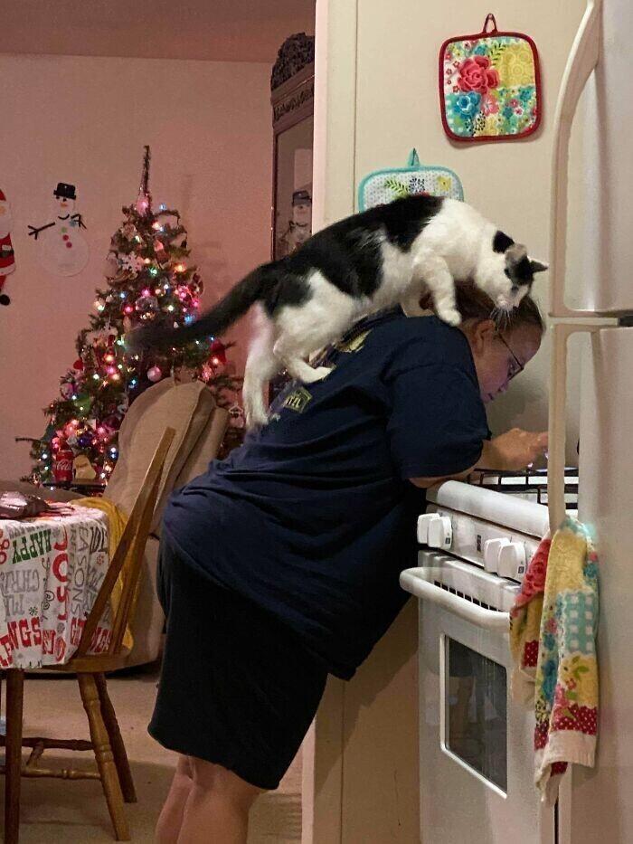 """""""Кошка моей сестры всегда интересуется, что она делает. Всегда!"""""""