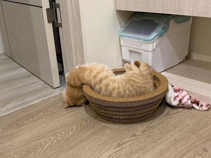 Коты - жидкость