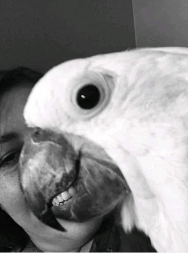 Видели зубастых попугаев
