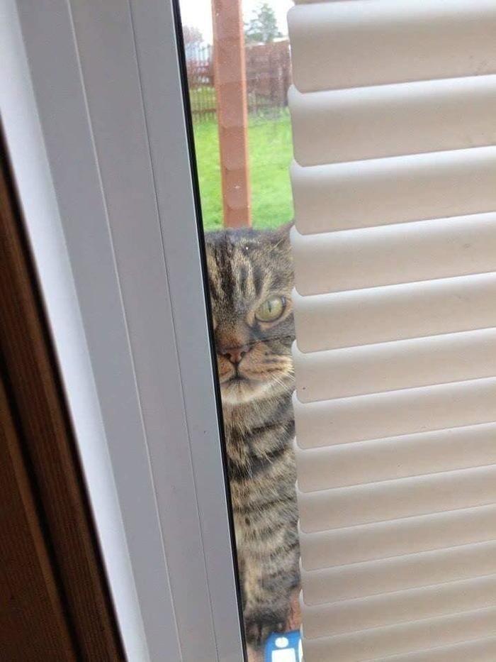 Коты за окном
