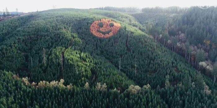В сосновом бору в Орегоне скрыта роща лиственных деревьев. Осенью, в период листопада, она видна даже с большого расстояния