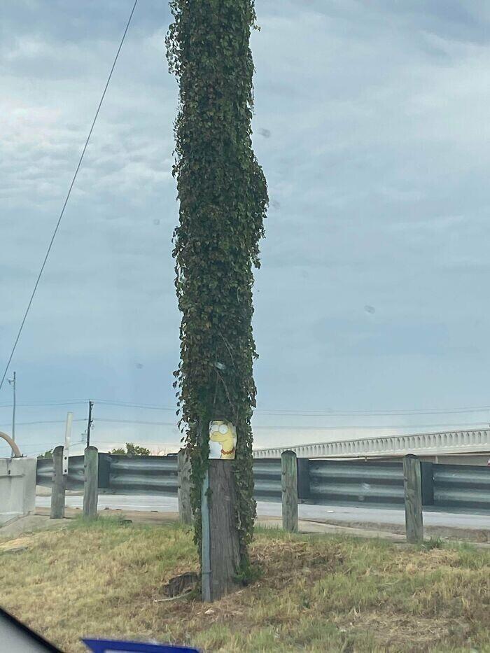 Этот столб действительно напоминает прическу Мардж Симпсон
