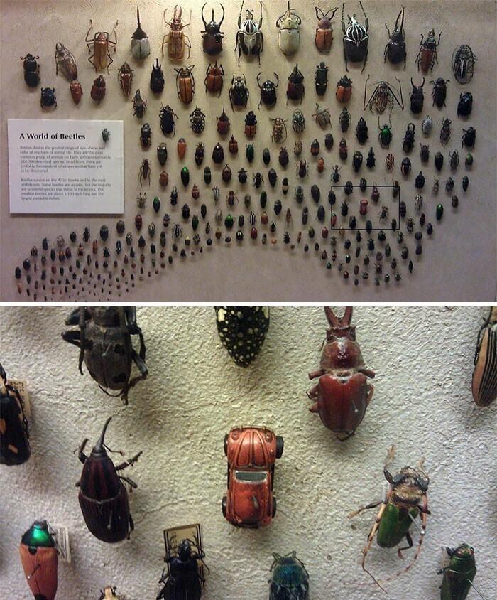 """Коллекция жуков: """"фольксваген-жук"""" не забыт!"""